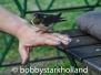 Fotografien von BSH - Tiere